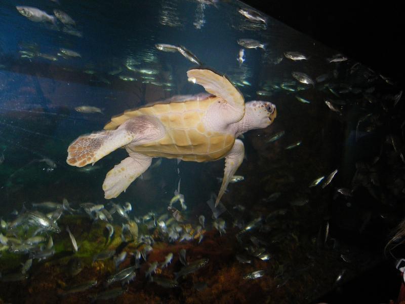 les-petits-au-nausicaa-de-boulogne-sur-mer.jpg