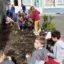Plantations dans la cour de l'Ecole élémentaire